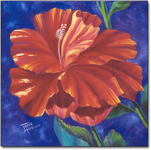 Hibiscus by Joan Hansen